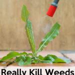 Vinegar Weed Killer