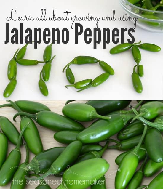 How to Grow and Use jalapeños
