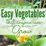 Easy Vegetables for Beginning Gardeners