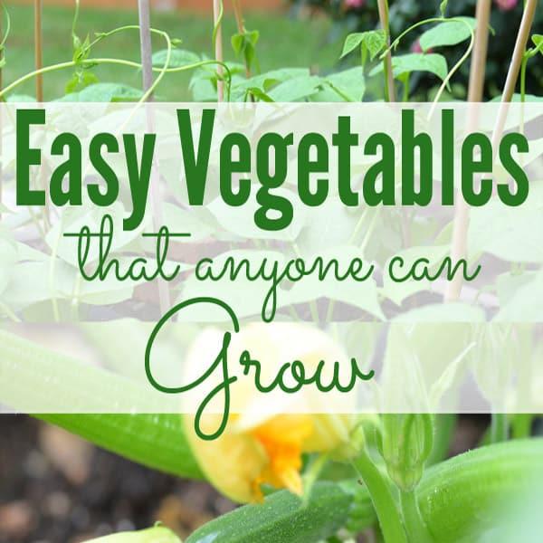 Easy Vegetables for Beginning Gardeners