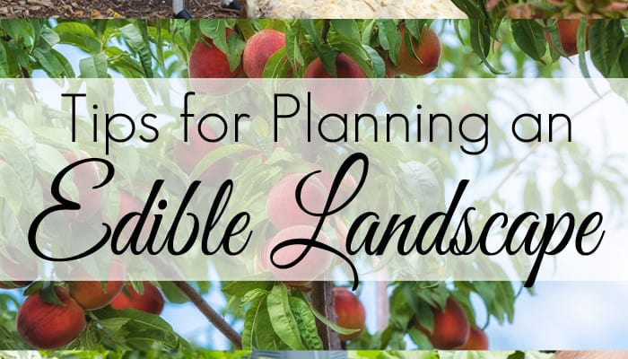 Tips for Planning an Edible Landscape