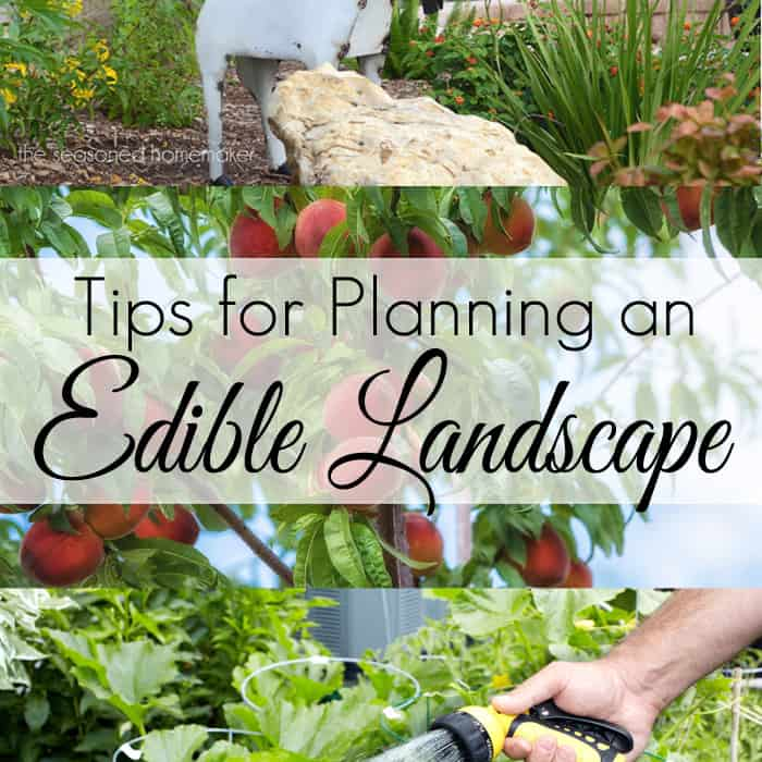 Tips for planning an edible landscape workwithnaturefo